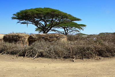 Exterior view of Maasai village and protective wall, Tanzania 1/03/09