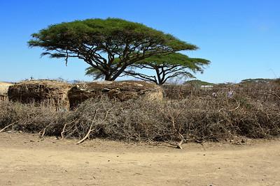 Exterior view of Maasai village and protective wall, Tanzania 1/03/09