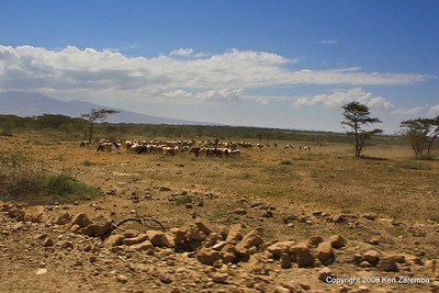 Maasai herders (the major occupation of maasai men), Tanzania 1/03/09