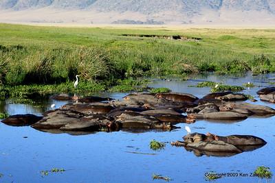 Hippopotomus pond, Ngorongoro Crater Tanzania, 1/02/09