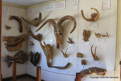 Olduvai Museum display, Tanzania 1/03/09