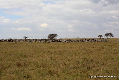 A Zebra hangout, Serengeti Nat. Pk. Tanzania 1/03/09