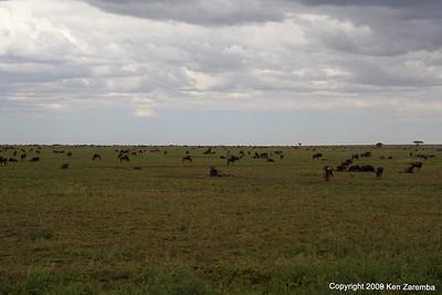 A wildebeest hangout, Serengeti Nat. Pk. Tanzania, 1/03/09