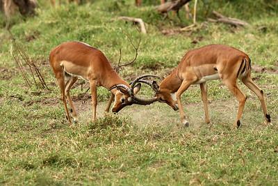 Joust impalas
