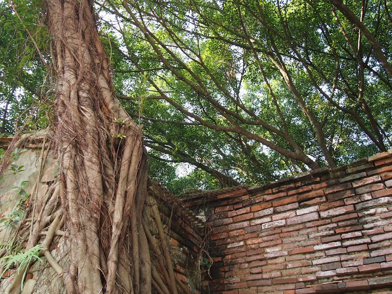 SouthTaiwan201112_0780_262552