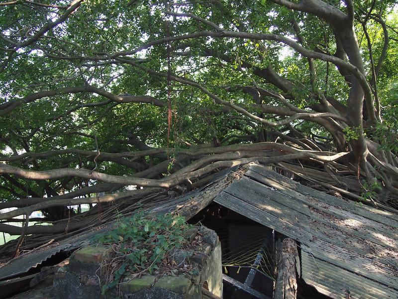 SouthTaiwan201112_0800_262564