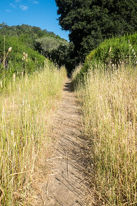 Path Through Grasses