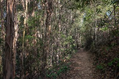 Trail and Eucalyptus
