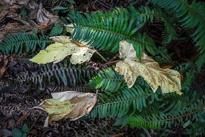Leaves on Ferns