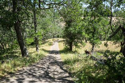 Stream View Trail
