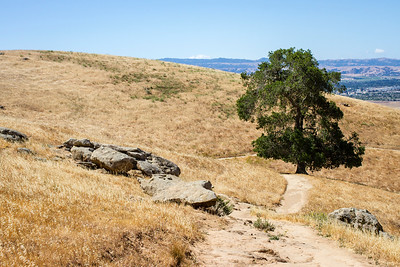 Trail Rocks Tree View