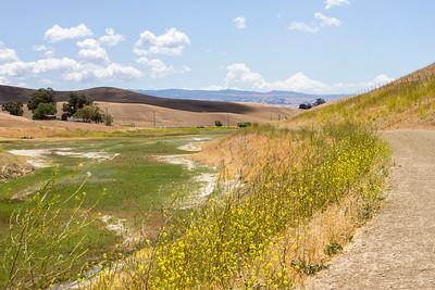 Mustard Along Trail