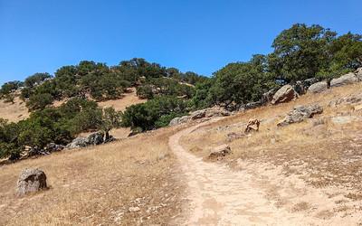 Trail Oaks Rocks