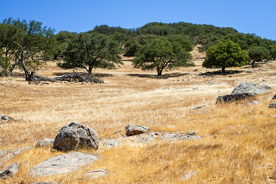 Oaks and Rocks