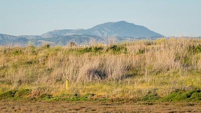 Grasses Mt Diablo