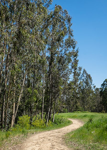 Eucalyptus and Trail