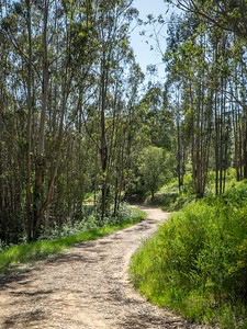 Goldenrod Trail