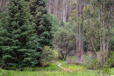 Redwoods Towhee Trail