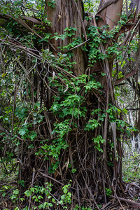 Tree and Poison Oak