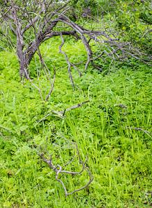 Dead Amongst Green