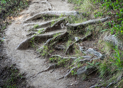 Roots in Path