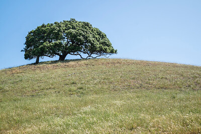 Hill and Trees