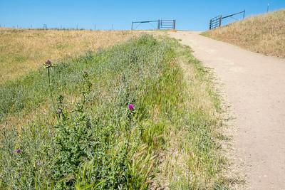 Trail Grass Thistle Gate