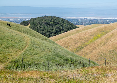 Two-Tone Hills