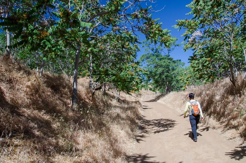 Along the Nortonville Trail