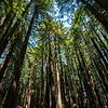 Rewoods Grove