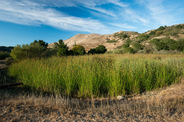 Esat Bay Regional Parks; Sibley Volcanic Regional Preserve; california; east bay; san francisco bay area This is at the end of the Pond Trail, a short hike down from the road.