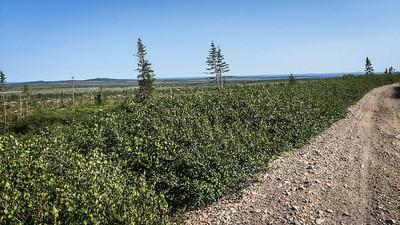 Gaff Topsail Newfoundland Trail