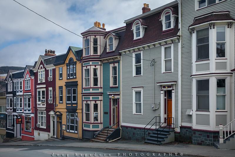 Newfoundland, Such A Treasure! (#0640)