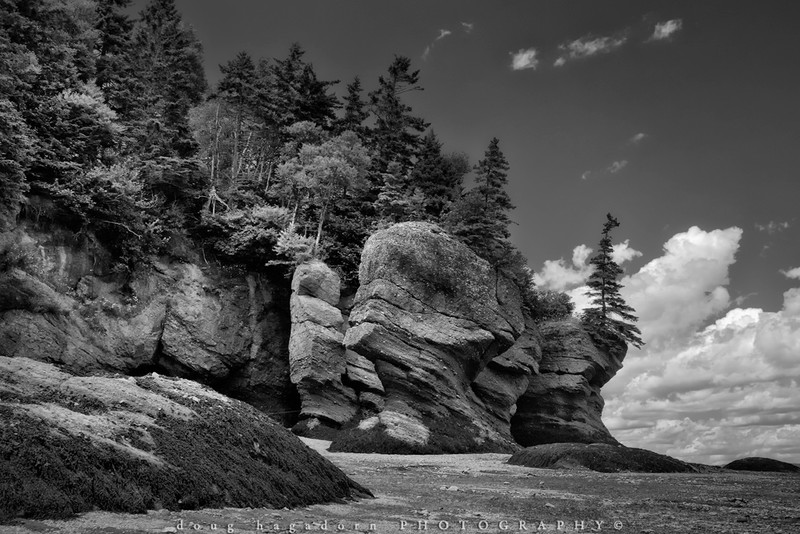 Hopewell Rocks (#0388)