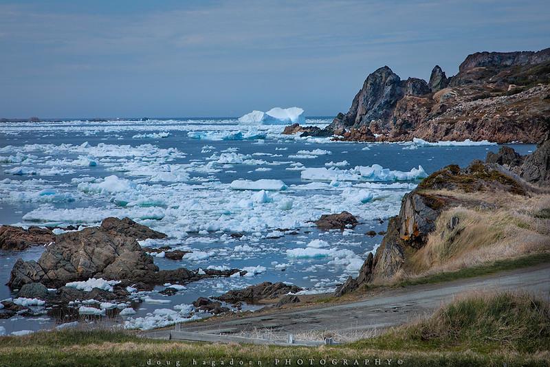 Newfoundland Spring (#0709)