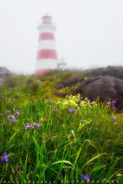 The Wild Irises of Nova Scotia