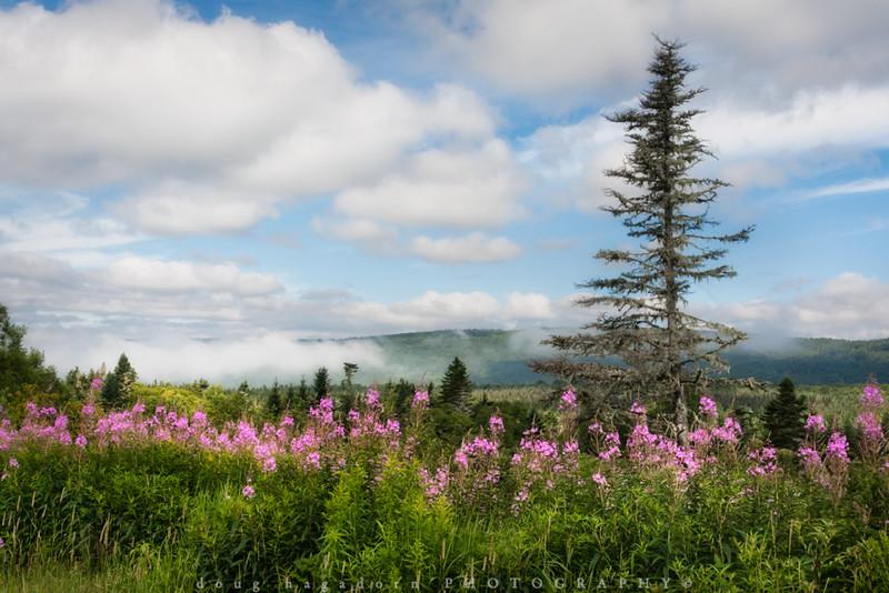 Wildflowers of New Brunswick (#0017)