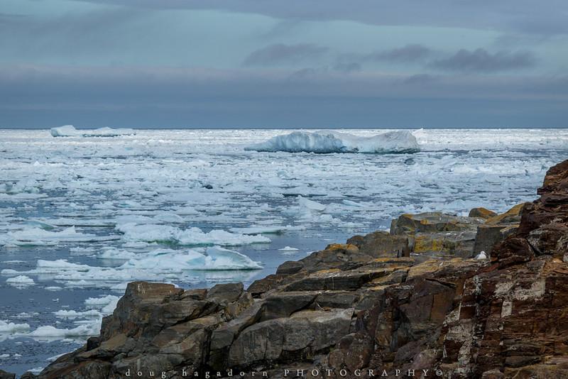 The Icebergs of Newfoundland (#0551)