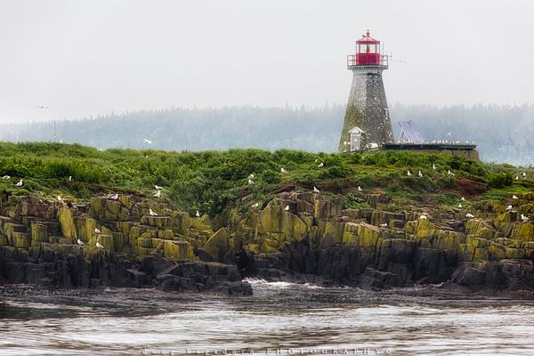 The Gulls of Peter's Island
