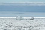 Newfoundland...Land of Icebergs (#0544)