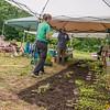 EHLT Pollinator Garden 7 25 18-87-2