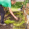 EHLT Pollinator Garden 7 25 18-88-2
