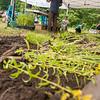 EHLT Pollinator Garden 7 25 18-93-2