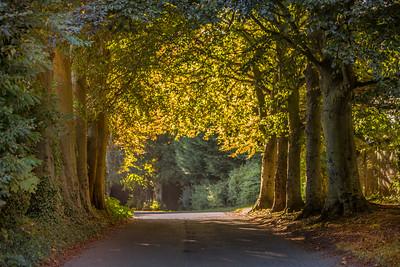 Autumn Colours ( Boyne Valley Hotel)-IMG_4432