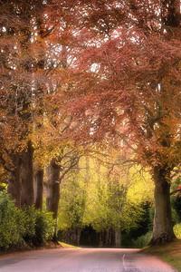 Springtime in Drogheda ( Boyne Valley Hotel, Stameen)-1L8A0768