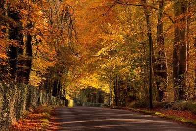 Autumn Colours at Piltown-1L8A9005
