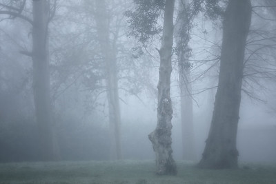 Trees in the Mist ( Boyne valley Hotel, Stameen)-1L8A6665