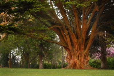 The Tree ( Boyne Valley Hotel, Stameen )-l1L8A0639