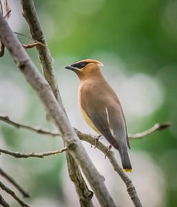 Bird (16)