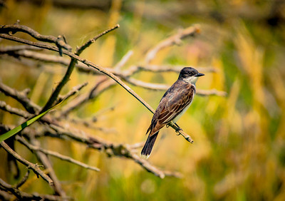 Bird (14)